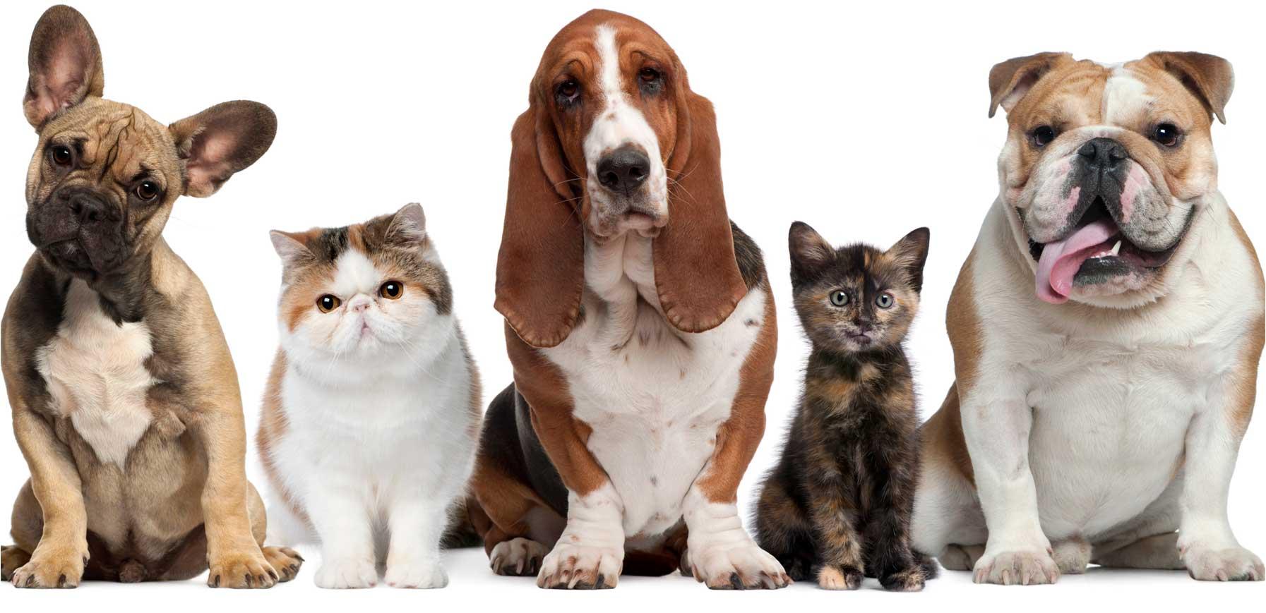a mascota dentro de la zona protegida o el área a vigilar y los que podrían venir a consecuencia de la entrada de un intruso